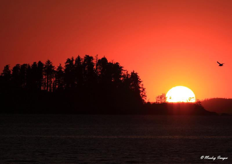 Island Sunset.JPG