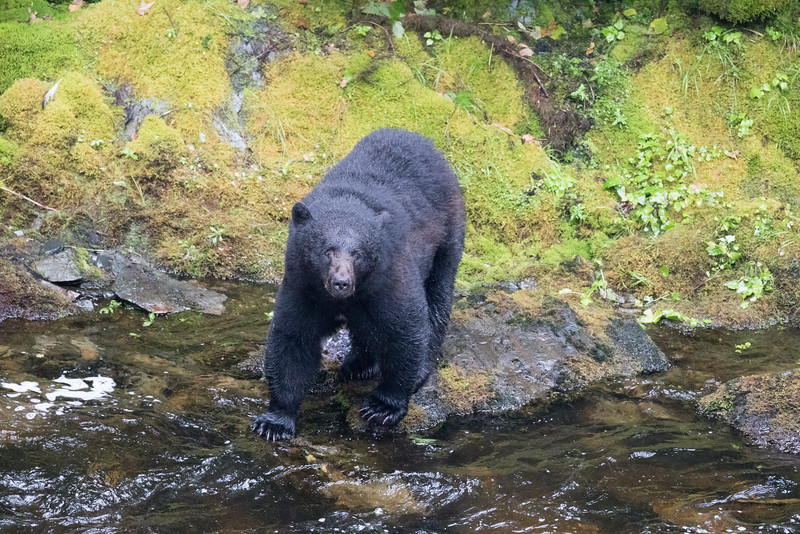 Alaska 2015 - Ketchican -  072815-028.jpg