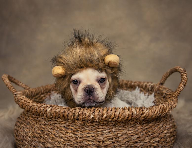 Finn lion ajs-7.jpg