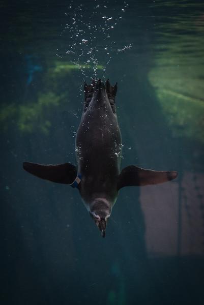 Syracuse Zoo August 2020-24.jpg