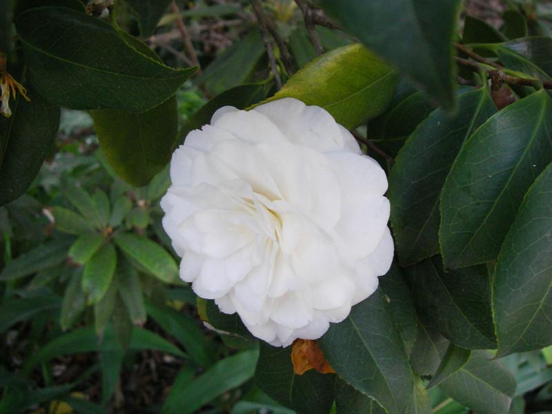 Trip,family,botanic gardens 081.JPG