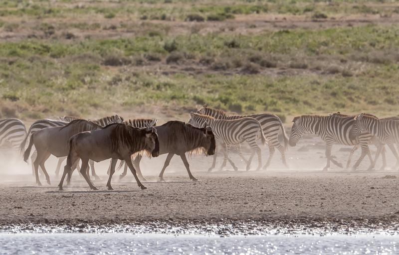Tanzania_Feb_2018-364.jpg