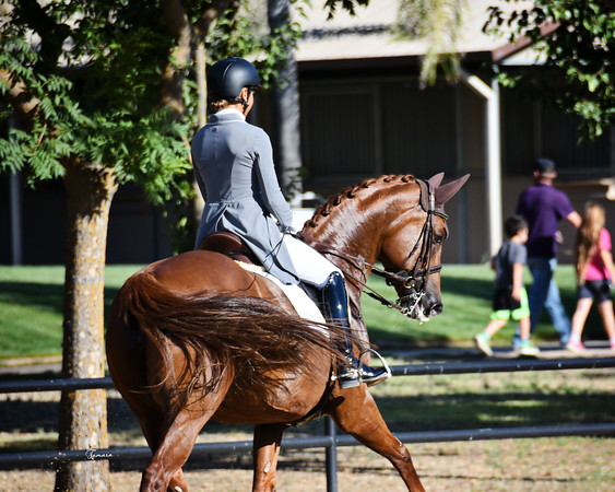 Starr Vaughn Summer Dressage Aug.14-15