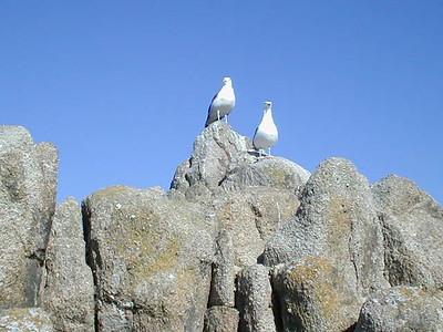 Day in Monterey 2002
