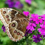 Butterfly_20070401_030.jpg