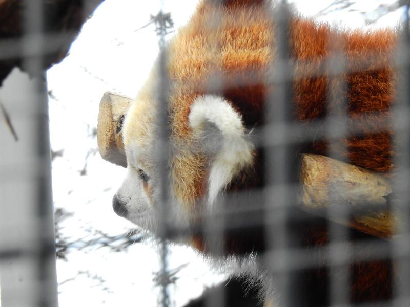 Denver Zoo 2018 (3040).JPG