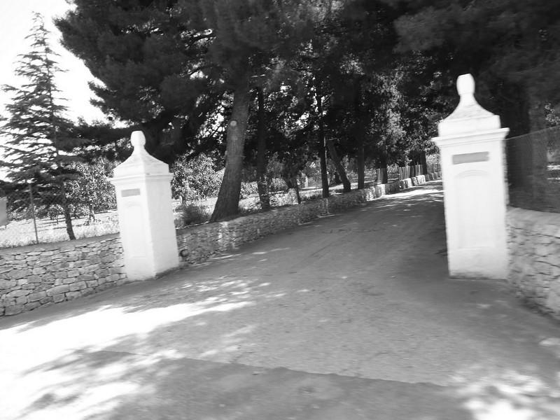 Typical view in Puglia (taken from van in B&W)