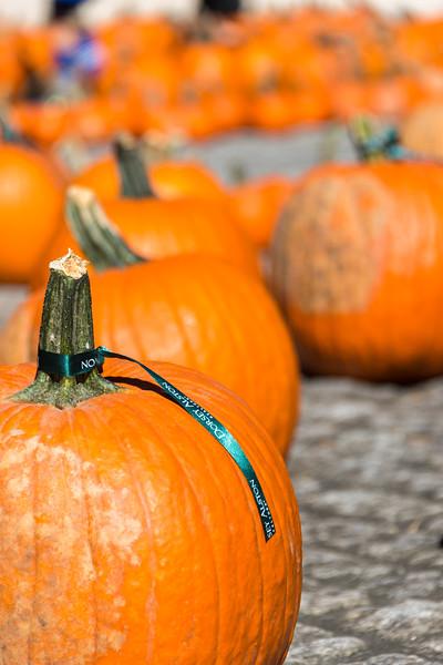 Dorsey Alston Pumpkin Patch (2 of 16).jpg