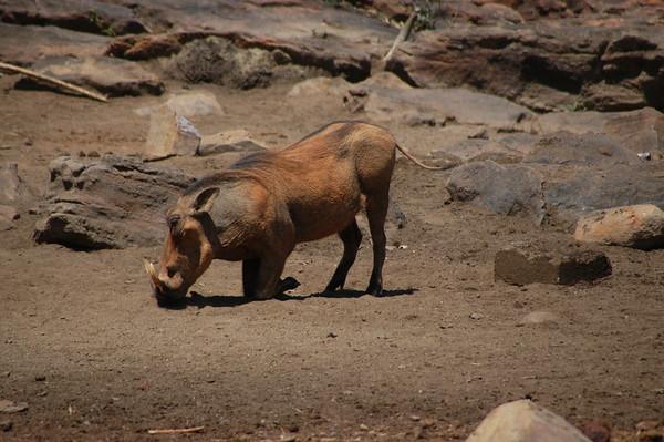 WartHog South Africa 2004 2007