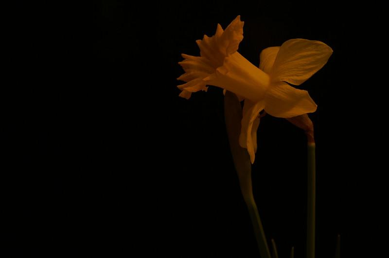 Yel Flower01.jpg
