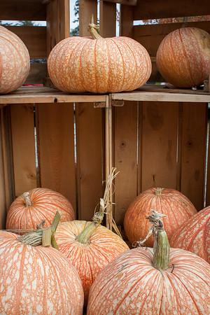 Gordon's Pumpkins 2016