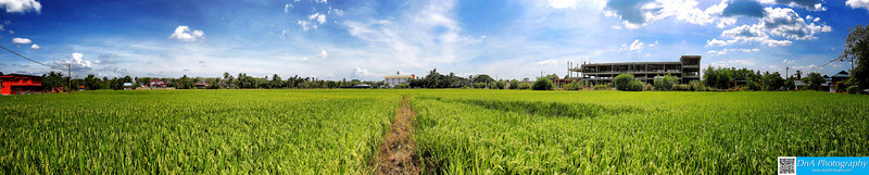 Padi Field at Alor Setar, Kedah