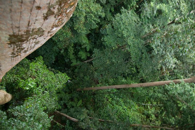 View from Canopy Walk at Kinabalu National Park, Sabah, Malaysia