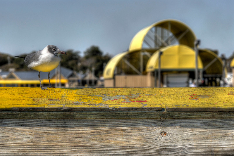 A lone gull enjoys the view on the end of the Apache Pier at the Apache Campground in Myrtle Beach, SC on Tuesday, March 6, 2012. Copyright 2012 Jason Barnette