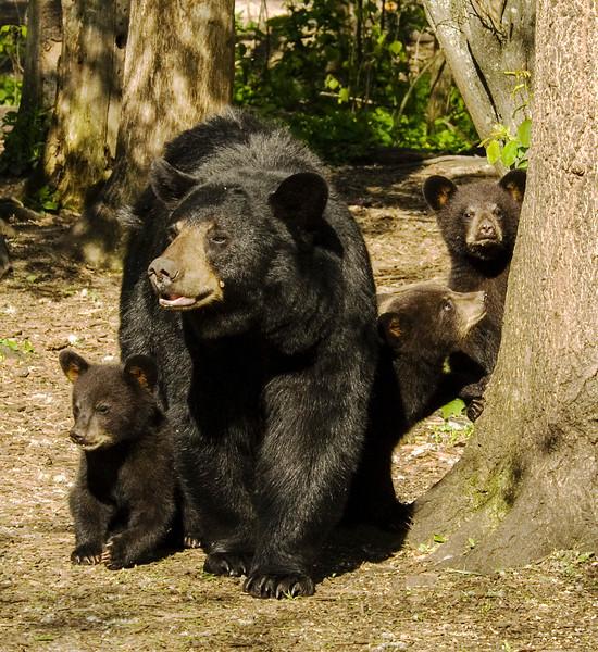 Bear Cubs-10.jpg