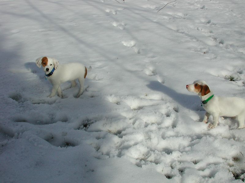 Feb 05- Puppies 025.jpg