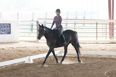 Horse 399