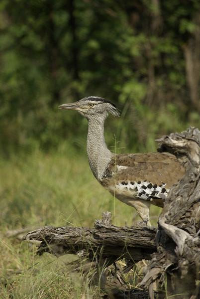 South Africa Birds Etc.
