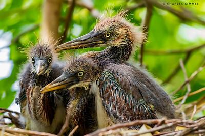 Nested Birds: 2019