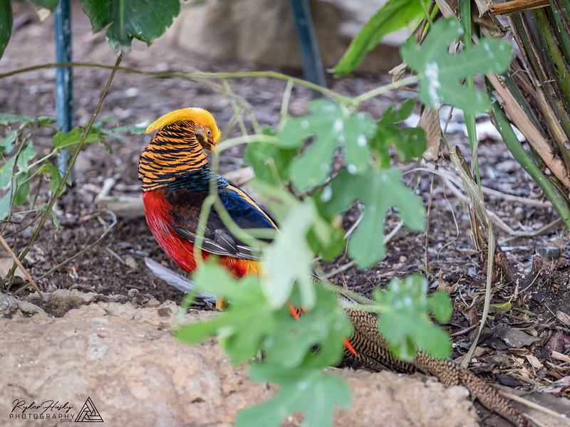 Santa Barbara Zoo 10-13-2018-072.jpg