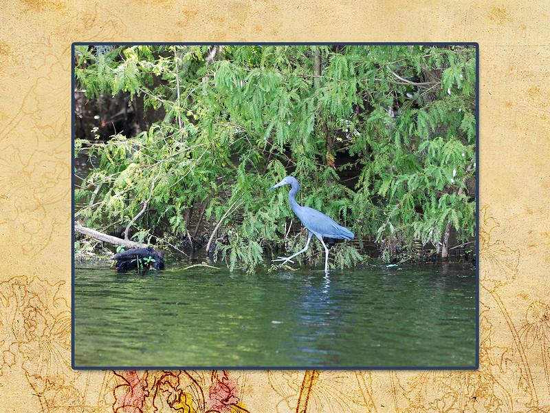 LakeJessup-page11.jpg