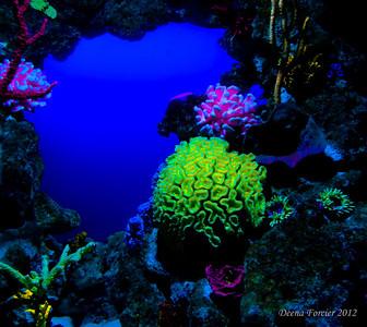 Atlantis 2012
