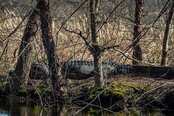 20190310-CCC Gators EaglesDeer Turtles