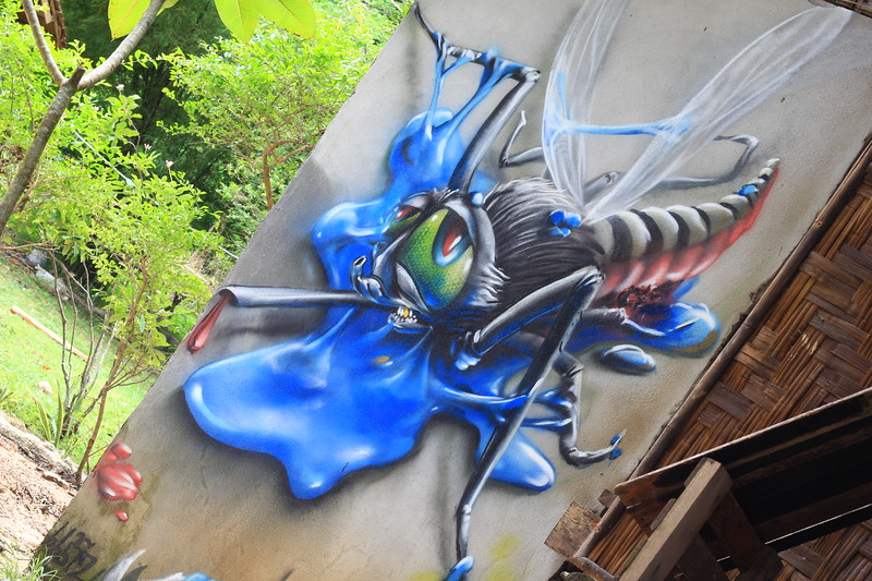 IMG_2480 mosquito dansook Valentain.JPG