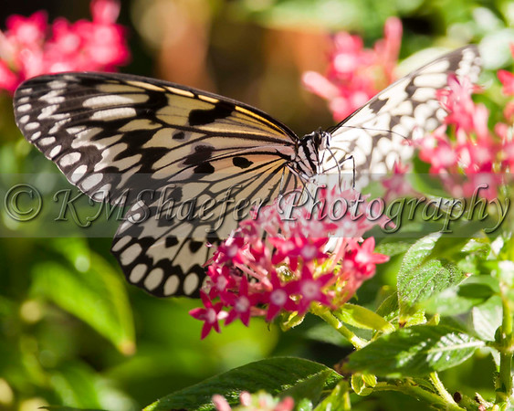 2011 Butterfly House