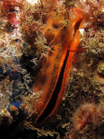 Catalina-Ship Rock(2), Eel Cove 01-30-10