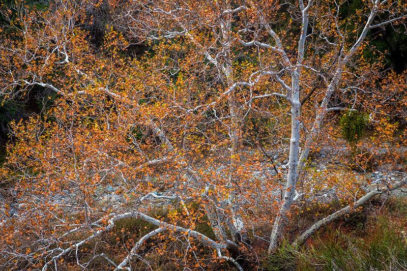 Fall in the San Gabriel Mountains.jpg