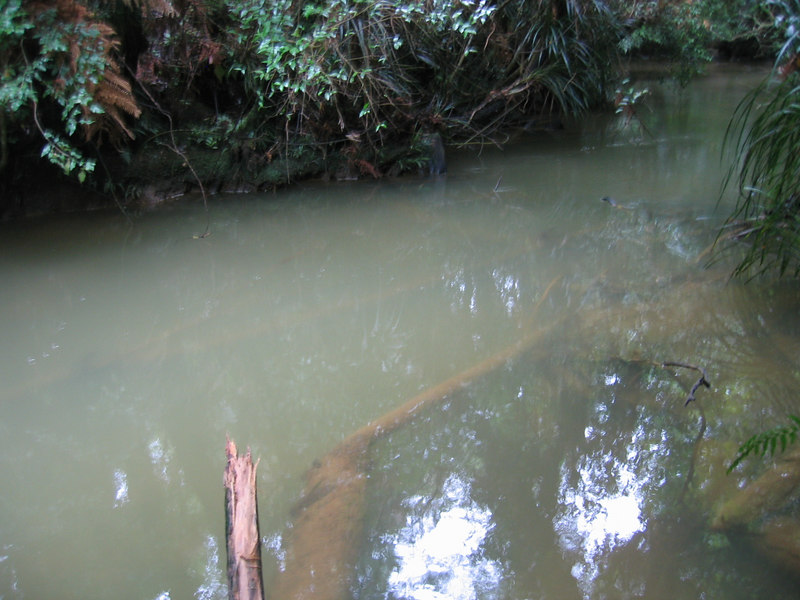 murky_river_2.jpg
