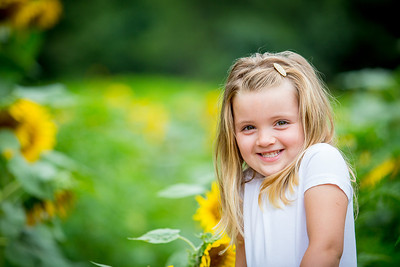 Bowles Sunflower Session