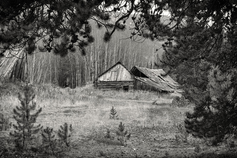 The Abandoned Homestead