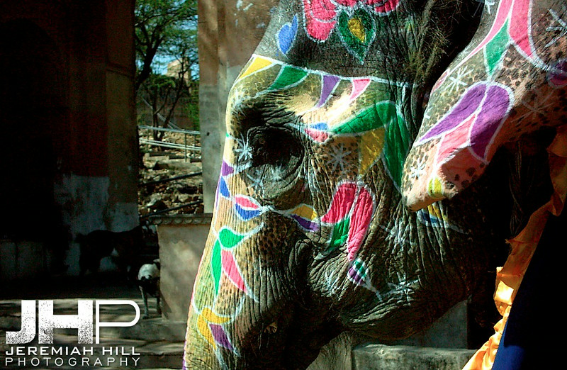 """Painted Elephant"", Amber Fort, Jaipur, Rajasthan, India, 2005 Print INDIA9-145V7"