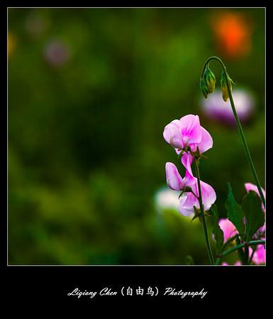 Unknown flower-9