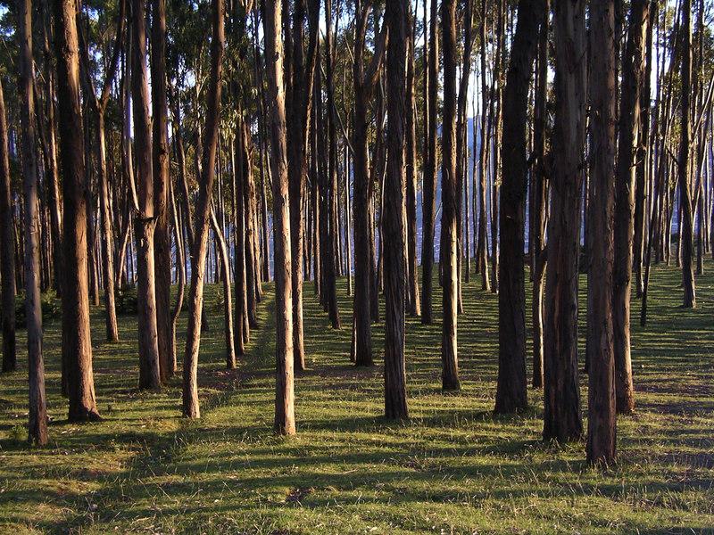 Pretty woods, highlands of Peru.
