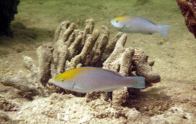 Florida-Keys-Key-West-Snorkeling-10.JPG