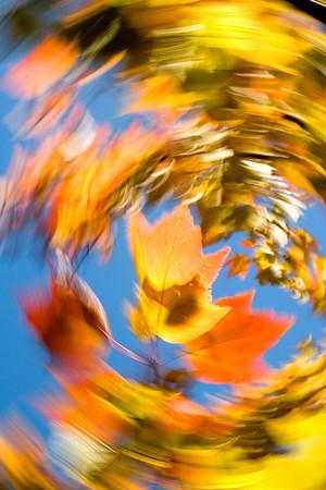 Fall Scenes, 2009