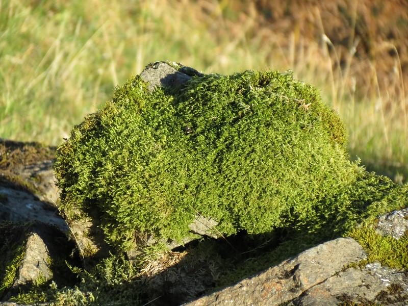 Scotland Downlaod 14 Oct 2014 Trotternish 147.JPG