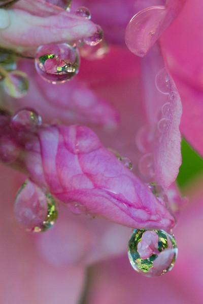 Flower_8301.jpg