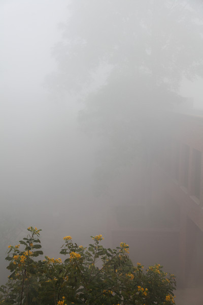 The fog outside our hotel window. We decided to take our time heading to the Taj Mahal - we couldn't see more than five feet in this fog.