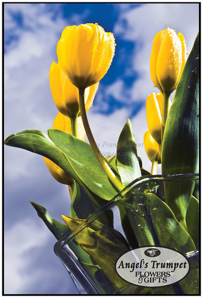 Angel's Trumpet Flowers