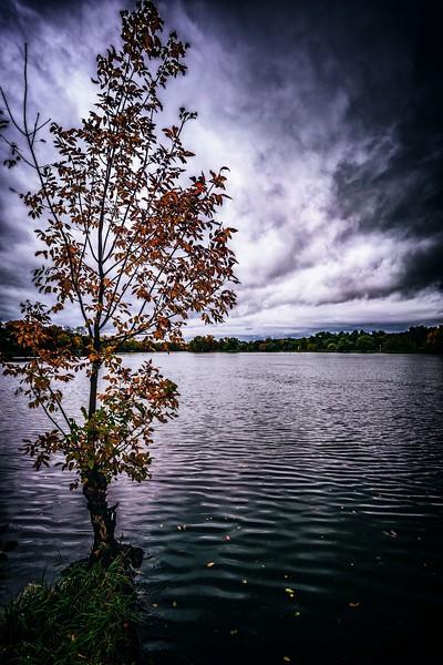 fall (1 of 1)-3.jpg