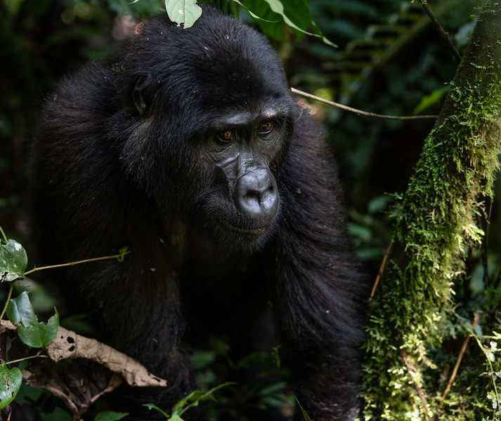 Uganda_T_Gor-380.jpg
