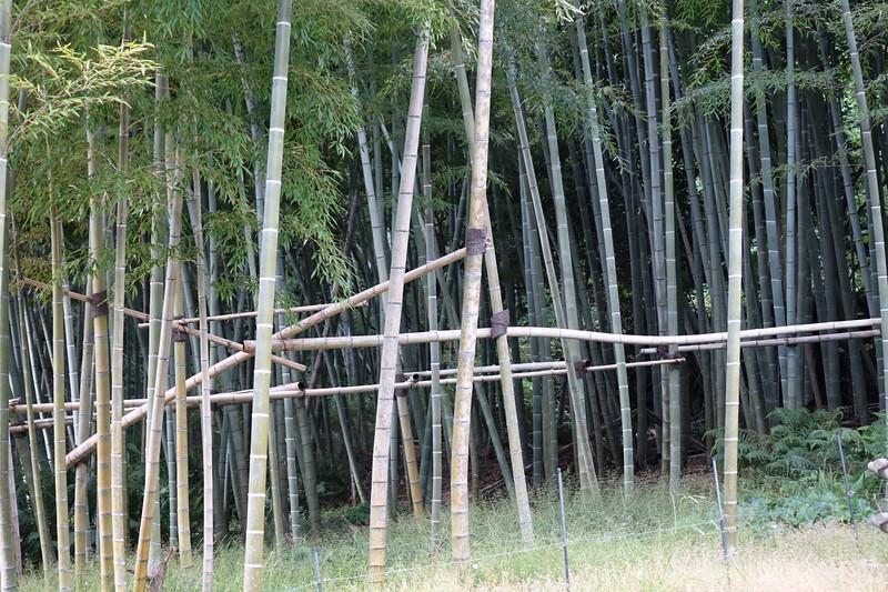 Konan bamboo grove