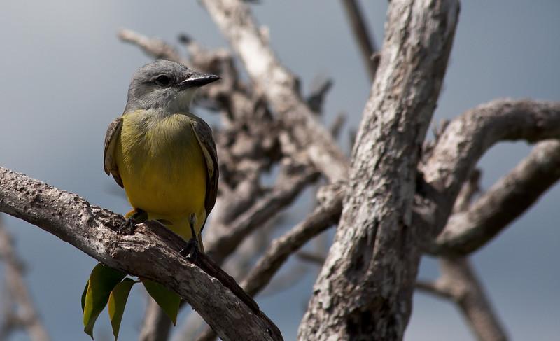 Bird in Tulum