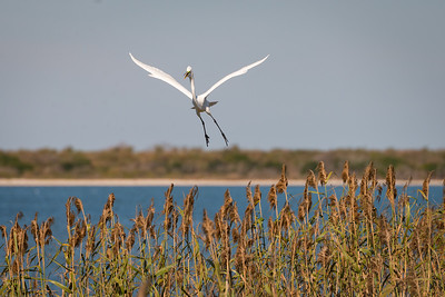Birds taken at Aransas Wildlife Refuge.