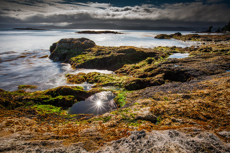 Low tide in the intertidal zone, Vancouver Island, British Columbia