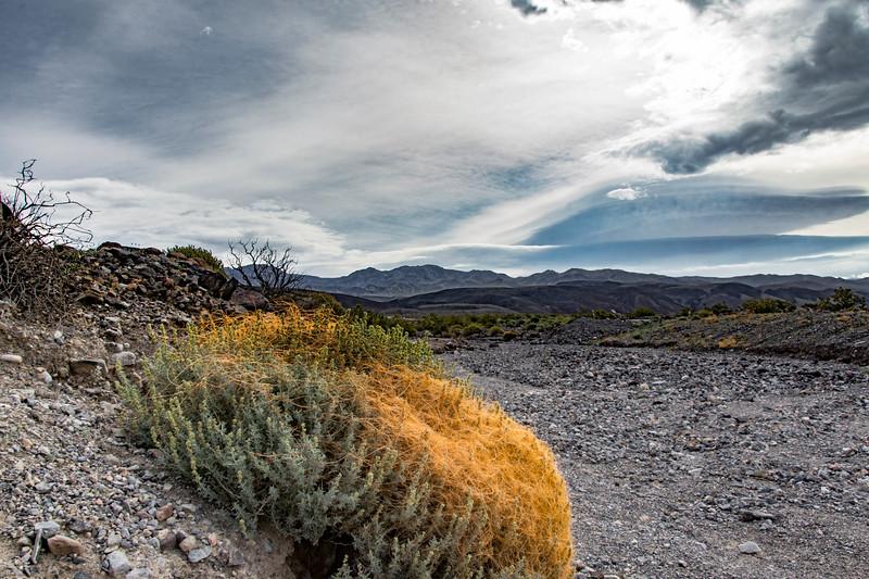 Death-valley-National-park-westentrance-parasiticplannts.jpg